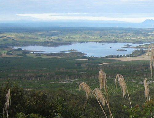 Rerewhakaaitu farmers managing nutrients to protect local lakes